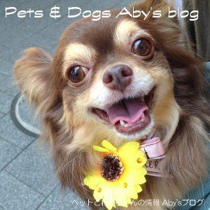 Pet-dog_300